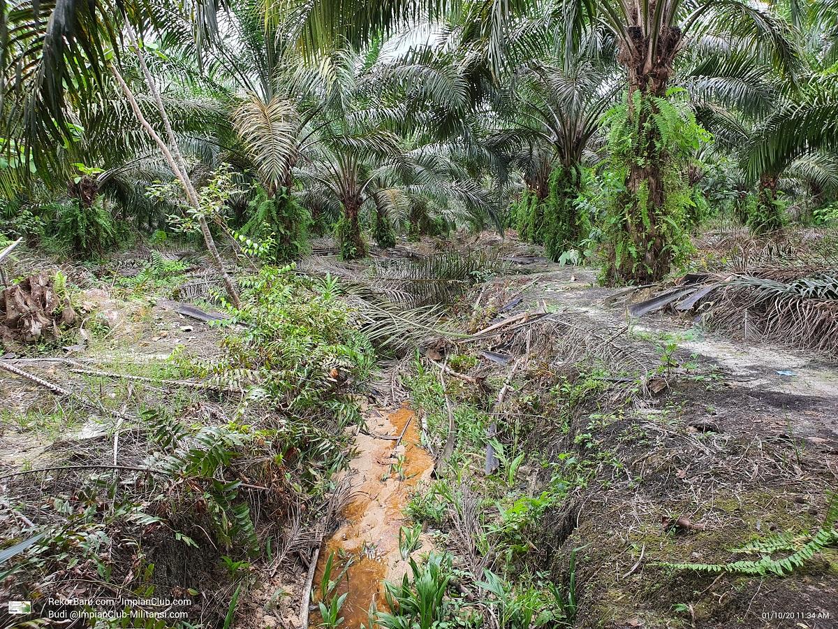 Parit yang dibuangin pelepah - pada akhirnya akan berpotensi menyumbat jembatan atau gorong-gorong - Blok P22 SMRE Divisi 2 - Kamis, 01 Oktober 2020